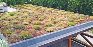 Bauder Dachbegrünung